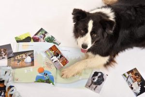 A kutyám naplója12